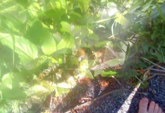 Greenery in the garden