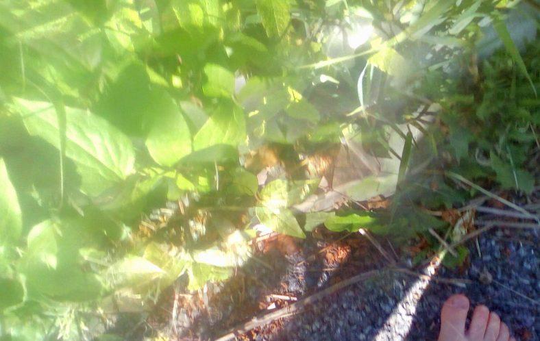 Greenery in the Garden | Tony Walshe