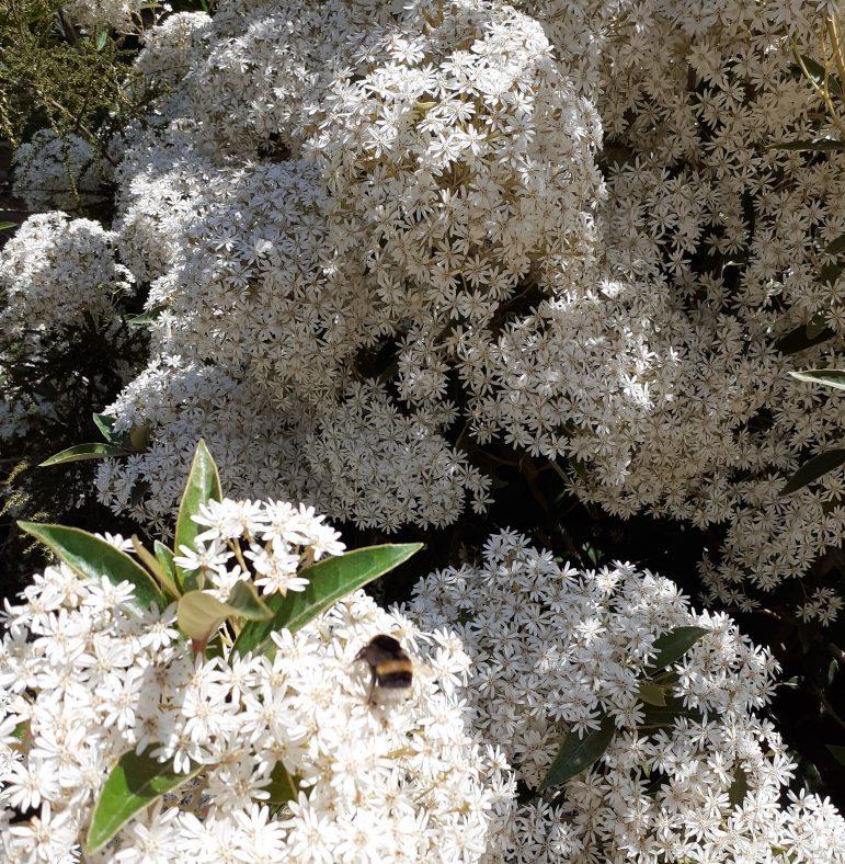 Bumblebee  | Oisin