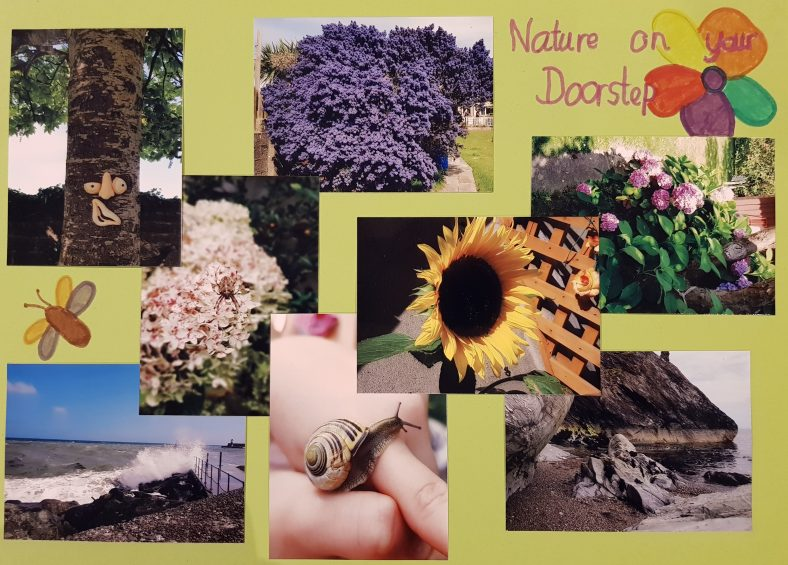 Amelia's Nature Collage | Amelia