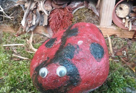 Rock Ladybird