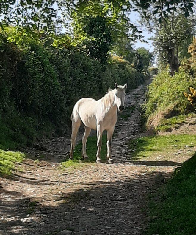 Horse on lane