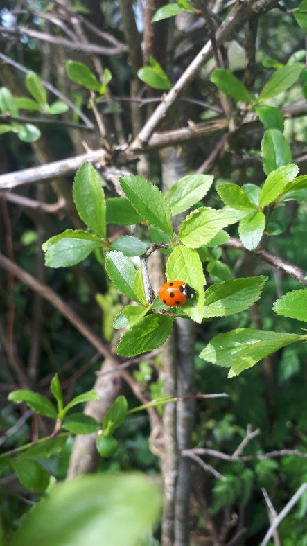 Ladybird | AJ Nolan