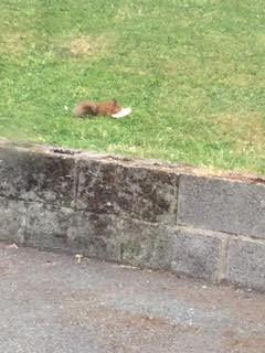 Squirrel | Maria McDonnell