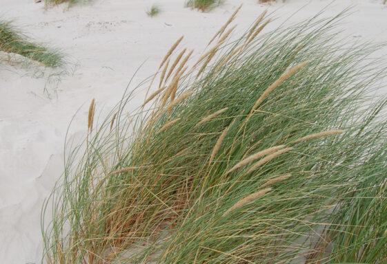 Brittas Bay Nature