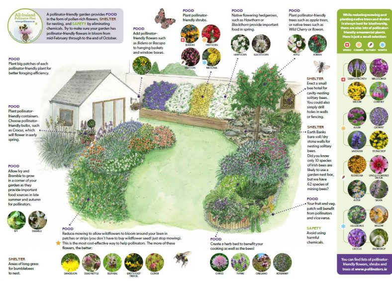 Pledge Your Garden for Pollinators