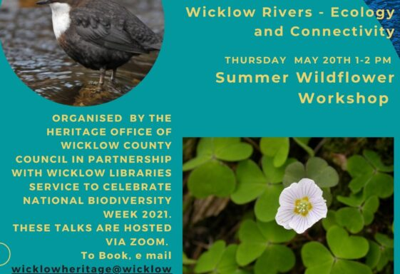 Celebrating Biodiversity Week 2021 in Wicklow