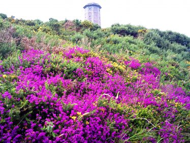 Heather | Wicklow Head Preservation Group