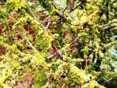 Yellow Lichen | Wicklow Head Preservation Group