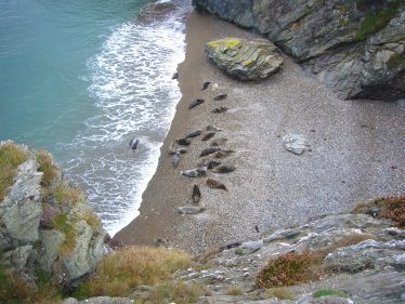 Colony of Seals | Wicklow Head Preservation Group