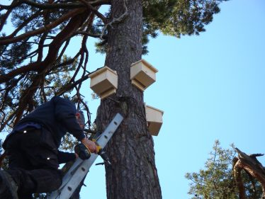 Bat Boxes being fitted near Vartry | Roundwood Tidy Towns
