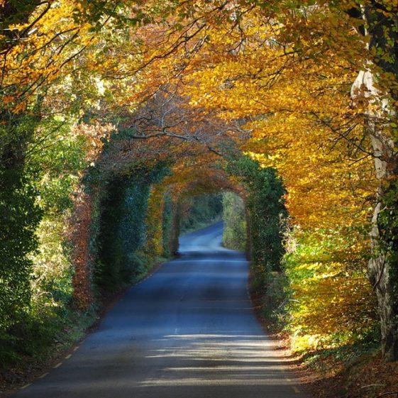 Autumn Tunnel   Triona Treanor