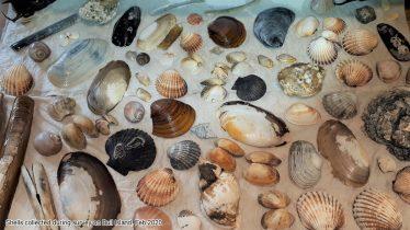 Big Beach Biodiversity Survey -  Training Workshop | Exploreyourshore.ie