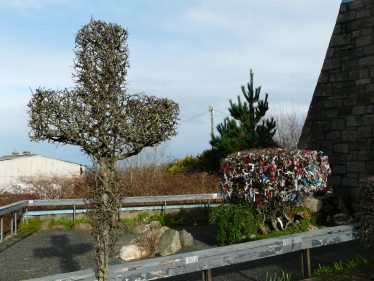 Cross and Maybush at Our Lady's Grotto | Mary Hargaden
