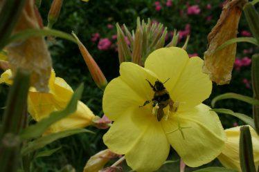 Laden Bee at Work   Crossbridge Development Committee