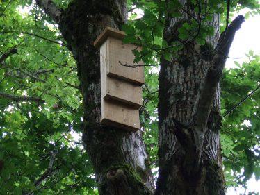 Bat Box   PURE Mile