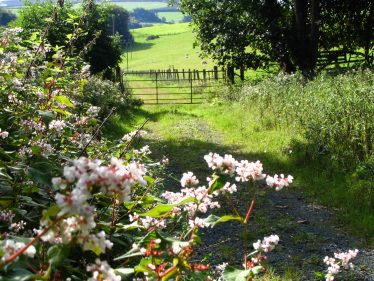 Beautiful hedgerows and gate to field in sunshine | The Askanagap Community Development Association