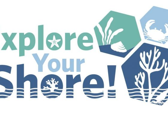 Big Beach Biodiversity Survey -  Training Workshop