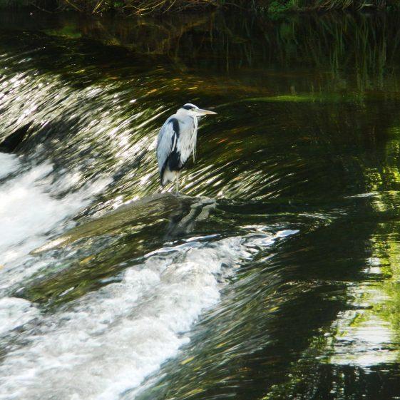 Fishing at Ashford | Ignatius Waters