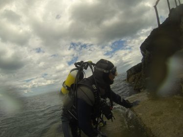 A look at marine biodiversity along the Wicklow Coast line