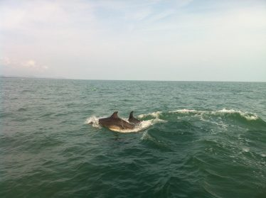 Bottlenose Dolphins Near Wicklow Town | R. Nairn