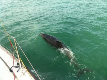 Bottlenose Dolphins Near Wicklow Town