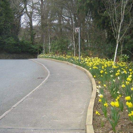 Fair Daffodils | Rathdrum Tidy Towns