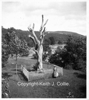 Moore's Tree