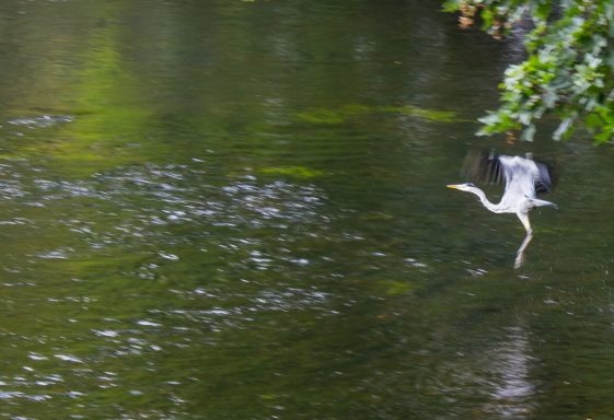 The Natural Heritage of the River Liffey