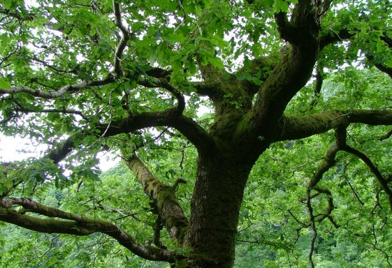 Wicklow Woodlands