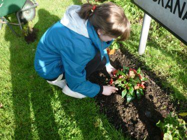 Planting Spring flowers at Askanagap sign | The Askanagap Community Development Association