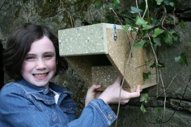 One of the artificial nesting boxes which are proving popular with Dippers. BWI