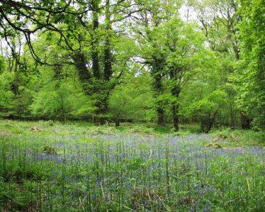 Wicklow Woodlands | Richard Nairn