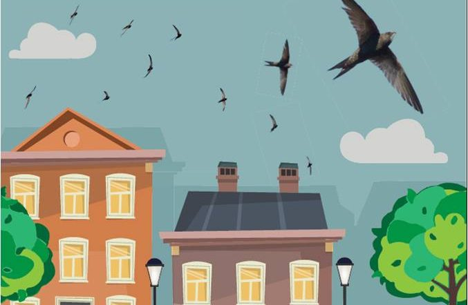 Saving Wicklow's  Swifts - Presentation & other resources