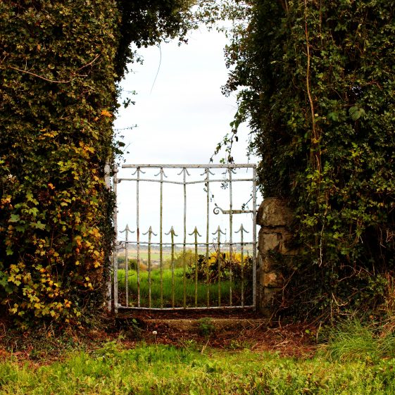 Small gate at gap in hedge | The Pure Mile