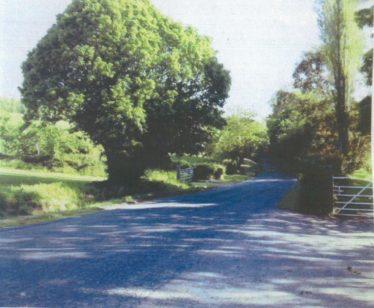 Common Ash Tree | Brittas Bay National School
