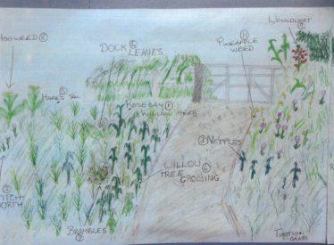 More Flora in the Area | Brittas Bay National School