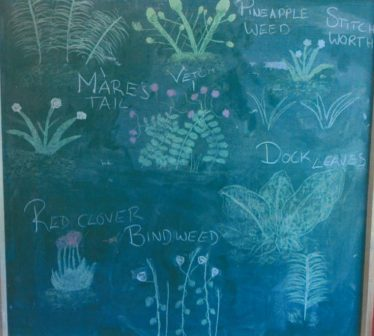 Flora in the Area | Brittas Bay National School