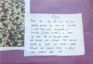 Moss | Brittas Bay National School