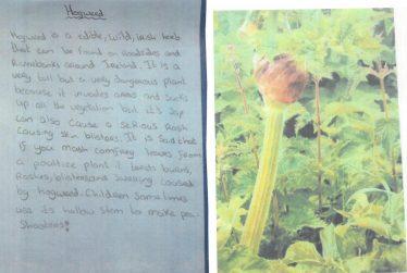 Hogweed | Brittas Bay National School