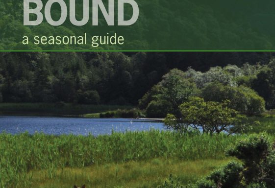 'Wicklow Bound: a seasonal guide'
