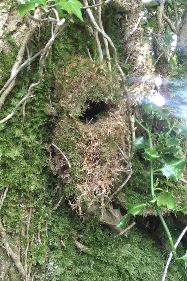 Wren's Nest   Askinagap Community