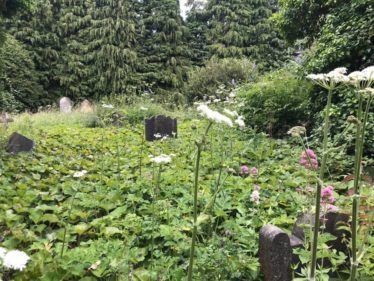 Graves and Church submerged in a green blanket. | The Medieval Bray Project.