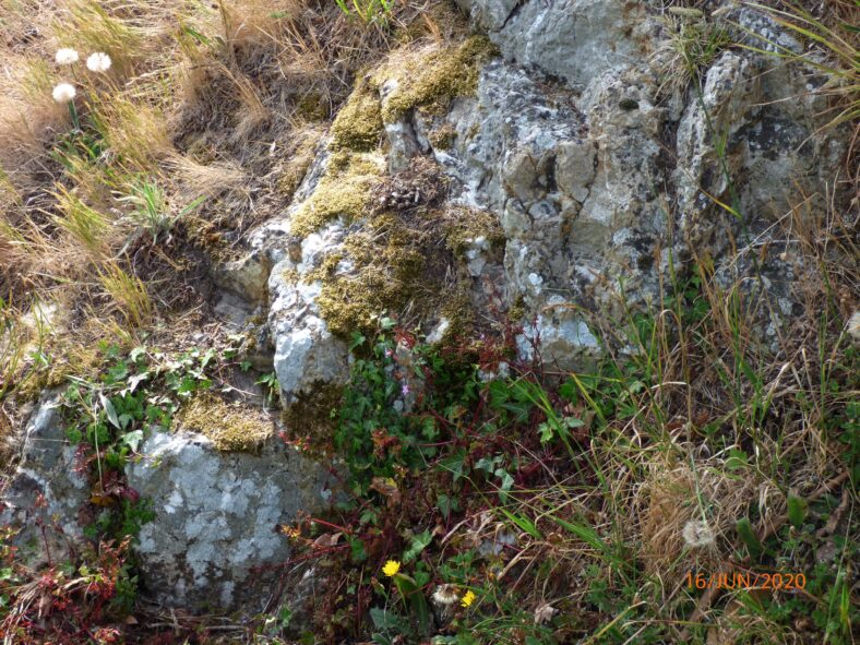 Outcrop on which Loretto Convent is built.  Fig 6. | The Medieval Bray Project