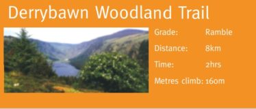Derrybawn Woodland Trail | Courtesy of the NPWS