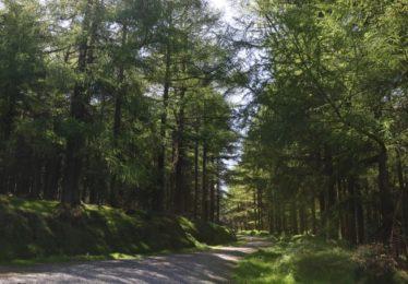 Coniferous Woodland | Courtesy of the NPWS