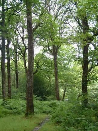 Deciduous Woodland | Courtesy of the NPWS